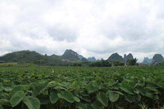 七颗星规划机构赴桂林市荔浦县考察乡村旅游项目